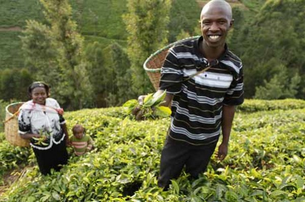 microfinance-agricole